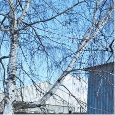 Система стабилизации крон и стволов деревьев «Лиана»